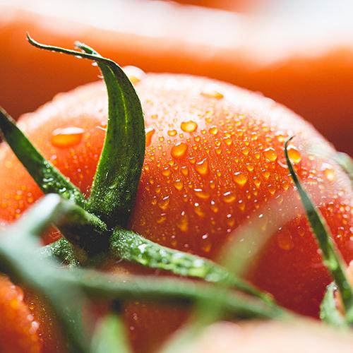 Regionale Tomaten