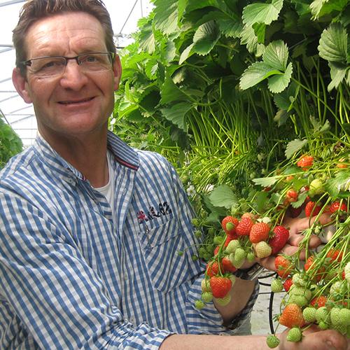 Regionale Erdbeeren