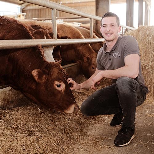 Regionales Rindfleisch